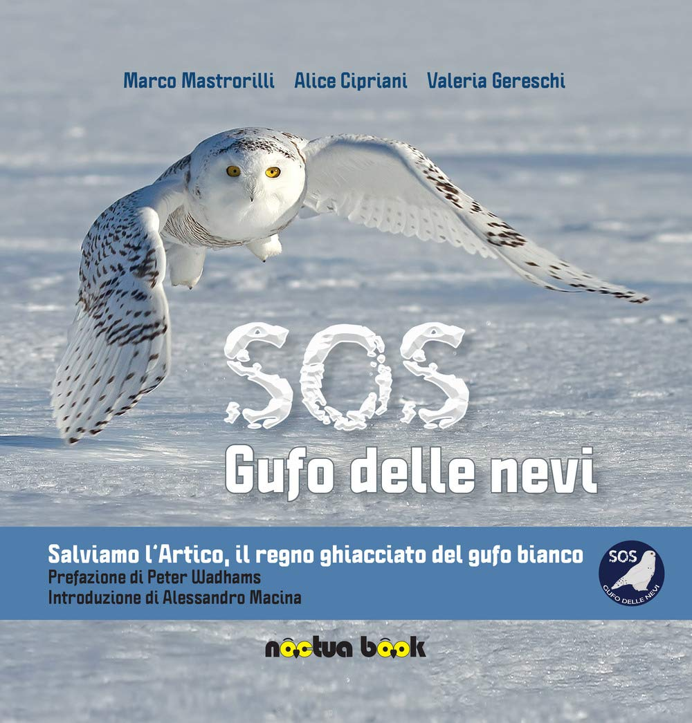 SOS gufo delle nevi